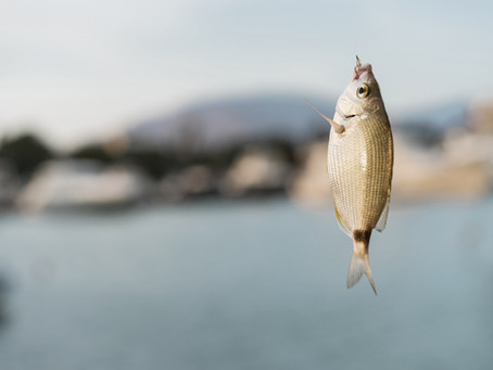 What do new tenants and Phishing have in common?