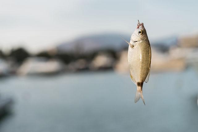 Peixe em anzol
