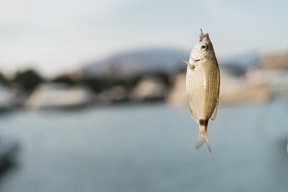 Ryba v háku