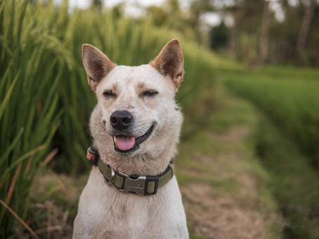 Do you know what plants are dangerous for dogs?