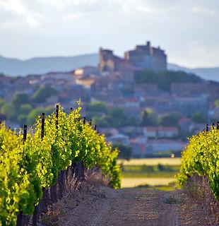 Formation vin Languedoc