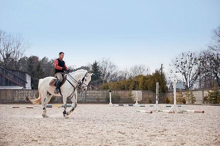 White Dressage Horse