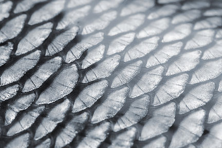Fish Scale Texture