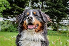 Hund im Freien