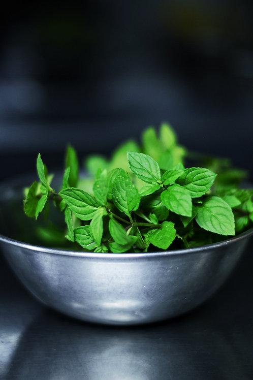 Plant Sale: Mint