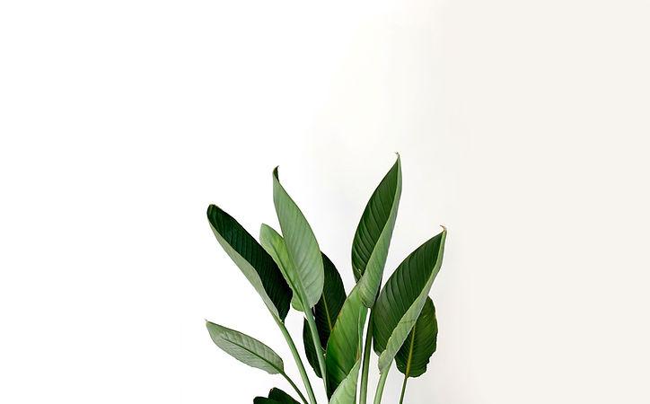 Green Outdoor Plants