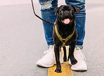Mit Hunden spazieren