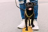 כלב שחור קטן