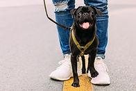 Marcher avec des chiens