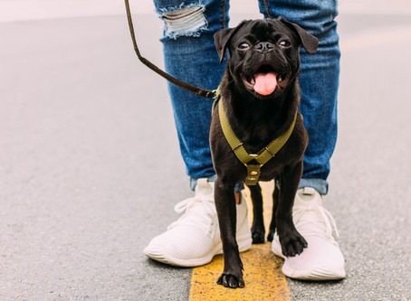 NYC Dog Laws Every Pup Parent Should Know