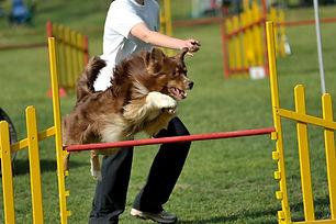 Gara di cani