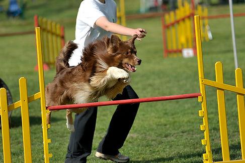 Dog Contest