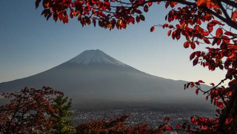 本日の営業情報(11月12日/GoToイートと県民割と)