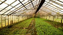 """BESANÇON - La ferme urbaine de Planoise lauréate de l'appel à projet """"Les Quartiers Fertiles"""""""
