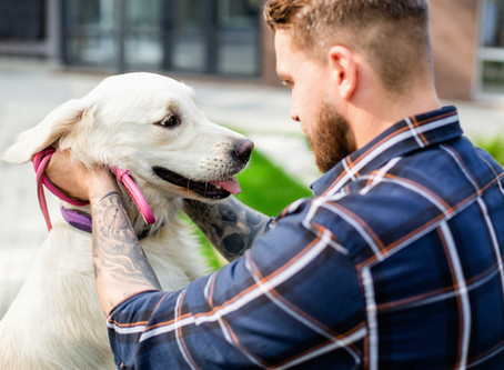 What you should know about Animal Assisted Therapy.