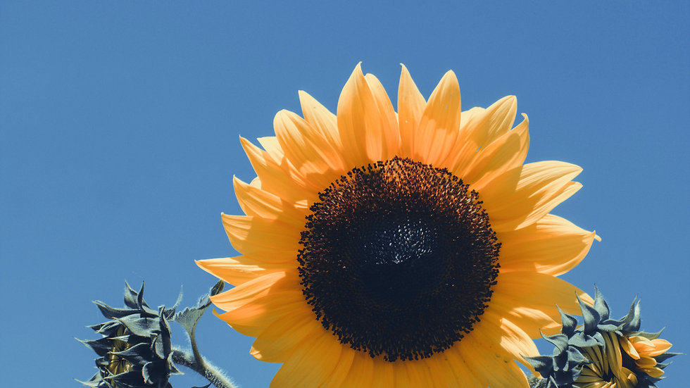 Sunflower Seed Butter