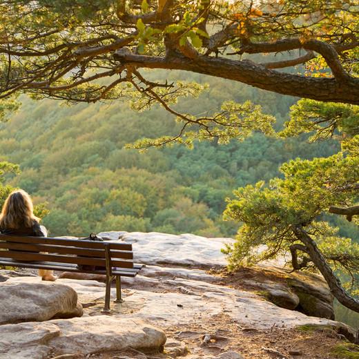 Mental Health: Silence Develops The Brain