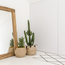 Spiegel- en kamerplanten