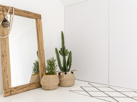 Indoor Plants for Tranquility and Wellness