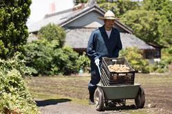 ジャガイモ農家