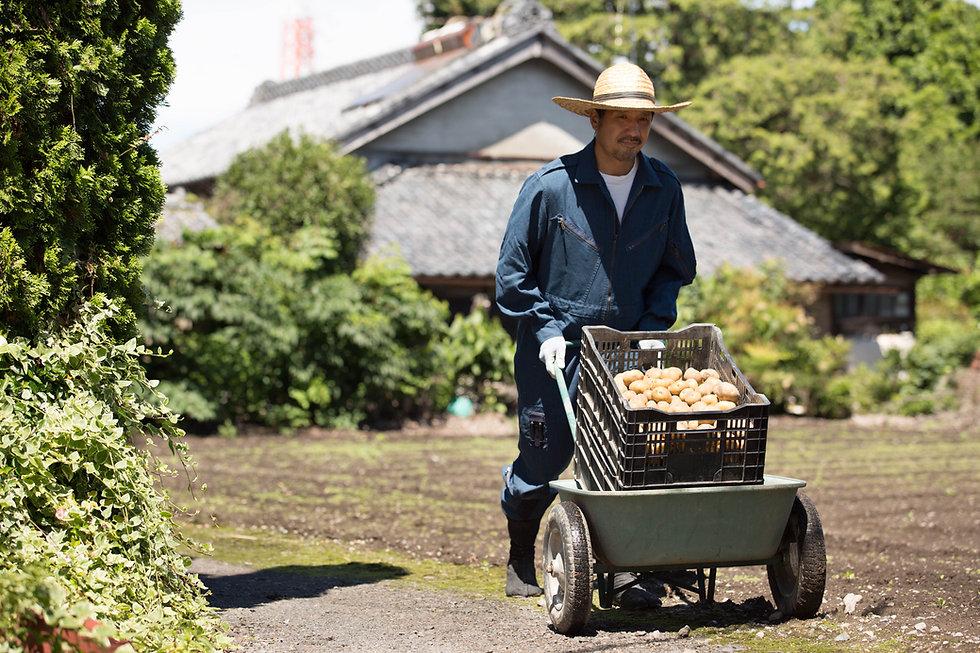 Homem com batatas