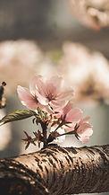 Flores como margaritas, peonias, hortensias son de las mas bonitas y si las combinamos se crea un estallido de color y aromas frescos y naturales, esto es lo que pretendemos en floristeria La Alqueria de Valencia