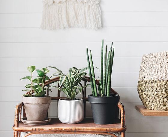 Three Plants