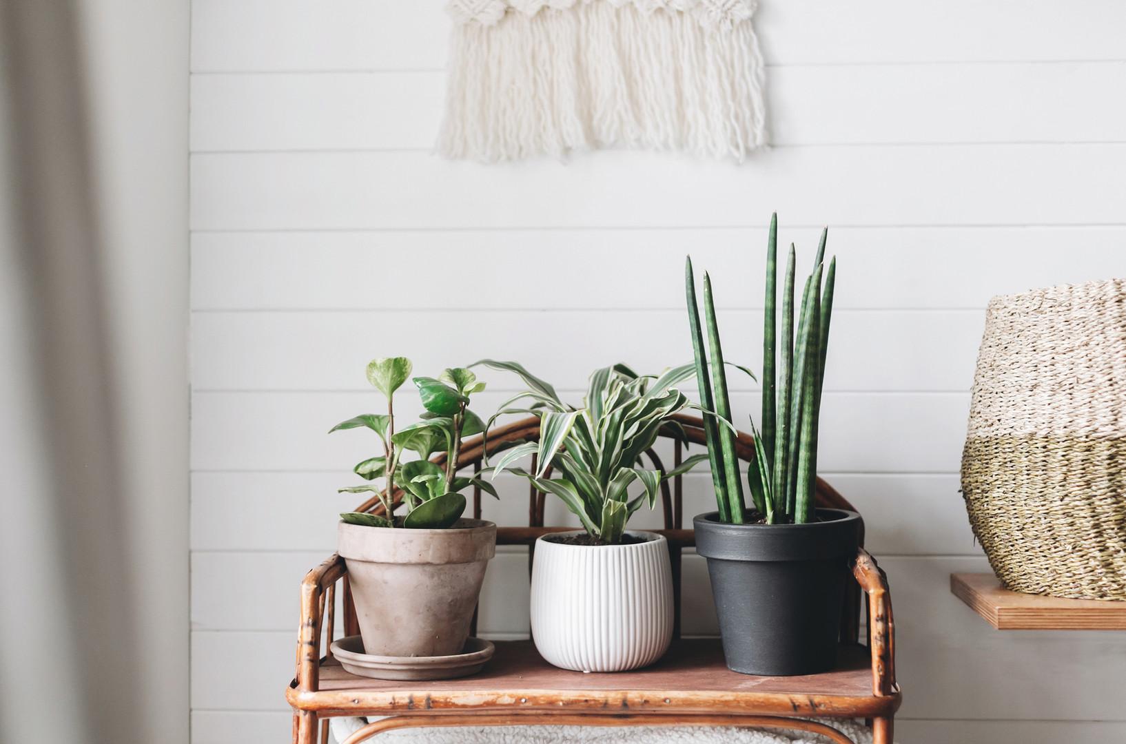 Drei Pflanzen