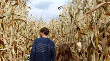PA farmers expecting record yields for corn, soybeans and tobacco