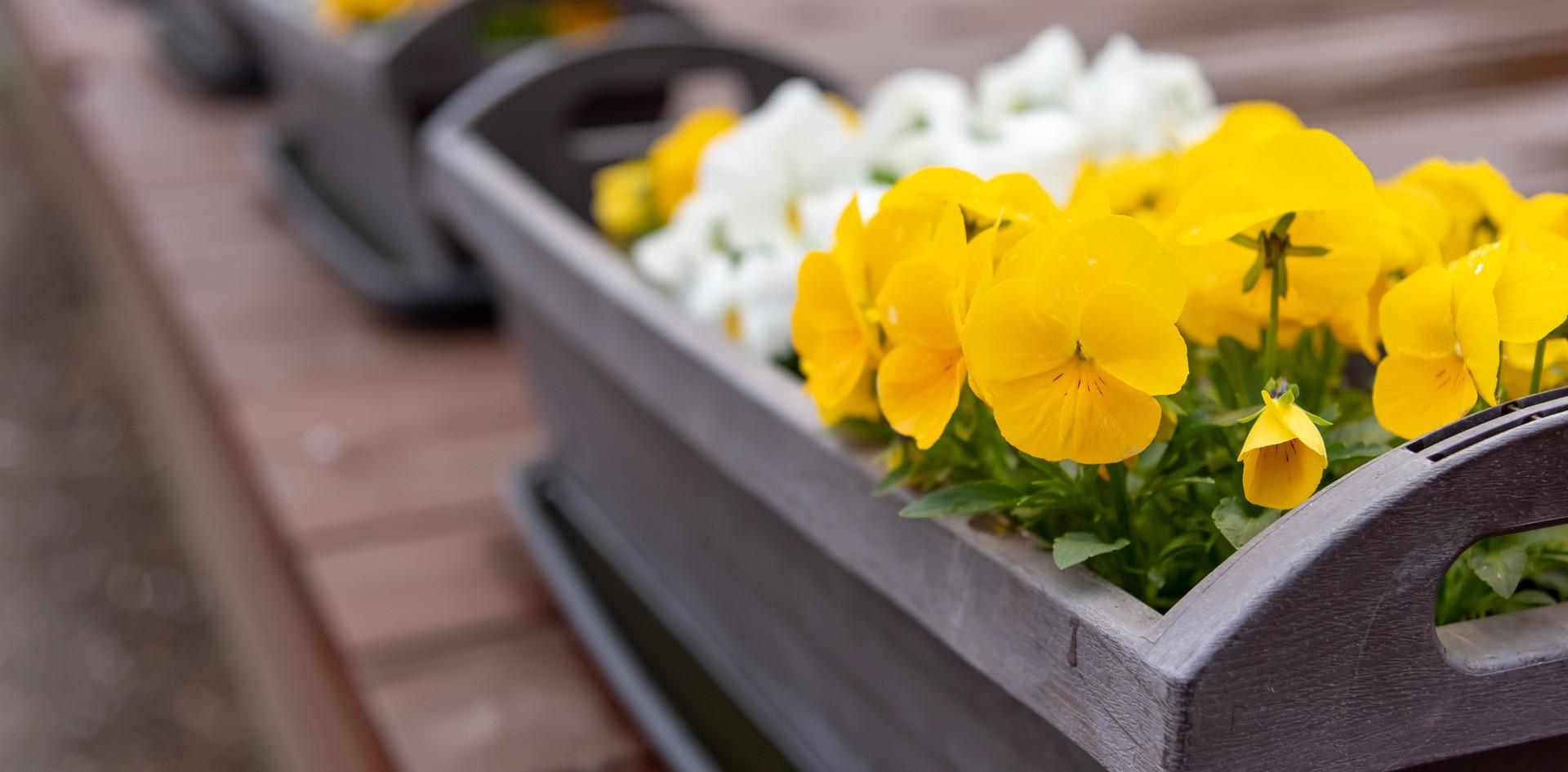 Blumen Angerer - Töpfe & Vasen