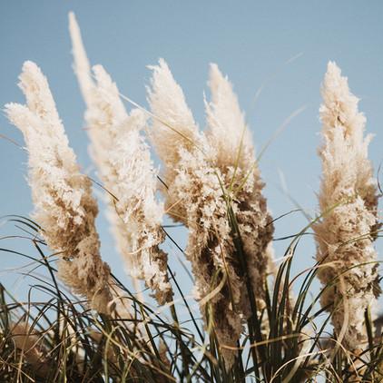 Der Wind tanzt durch das Schilf, www.fewo-dewes.com
