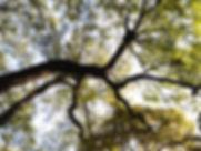 Through the Tree Branch