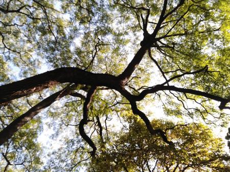Madrid plantará 7.500 nuevos árboles dentro de la campaña 2020-2021