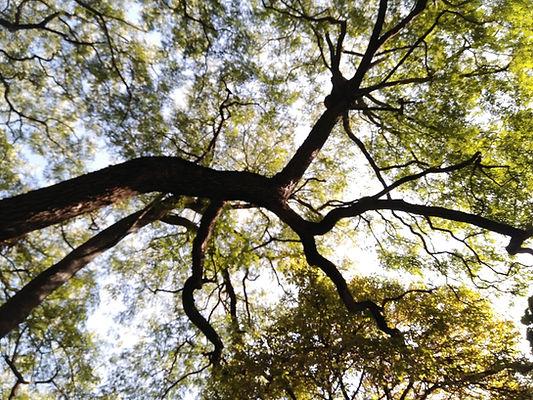 À travers la branche d'arbre