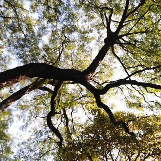 Taller de Vida Consciente 1 - Conexión con la Madre Tierra