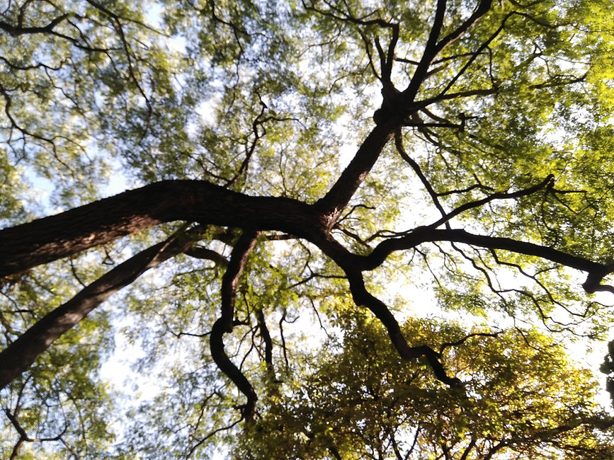 Galhos de árvore