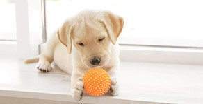 The Importance of Puppy Socialization in Training