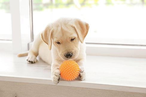 Un cachorro jugando con un juguete