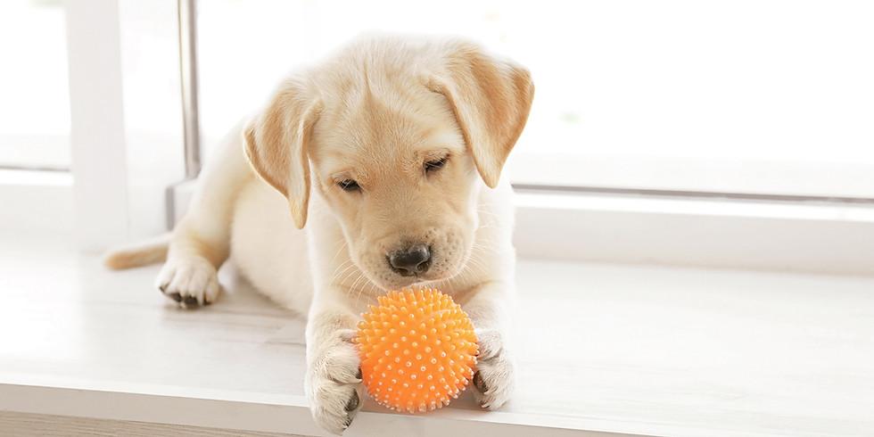 Brewer Puppy Play Day
