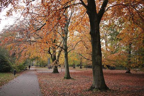 Park in de herfst