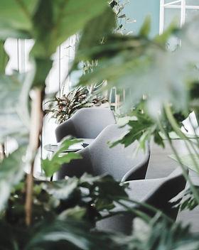 Interior Plants