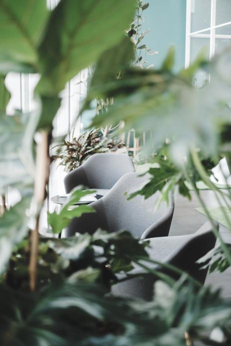 Product Review: Niyama Yoga  Wellness Daytime Zen Stress Support