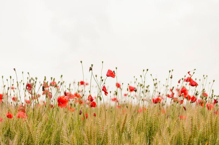 Free meadow