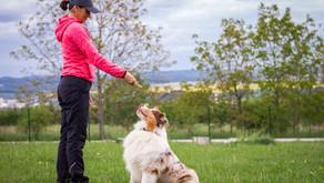 New Dog Training Courses