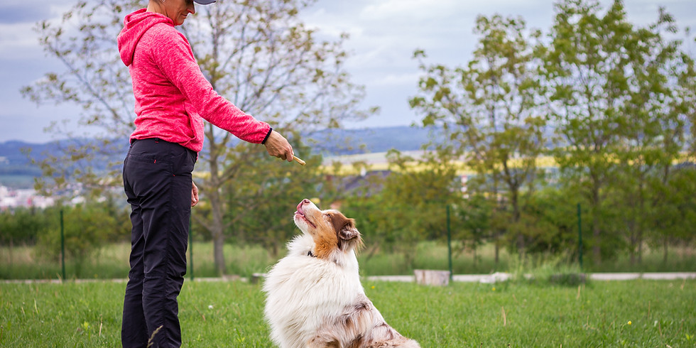 Animal Solution : 14 H Chien adulte DOG Dancing