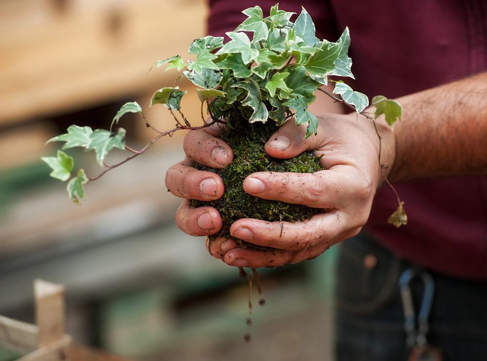 Homme tenant plante dans ses mains