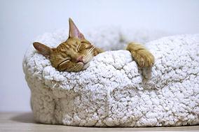 kedi uyku