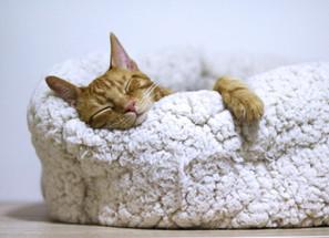 9 Bedtime Hacks Fall Asleep Faster