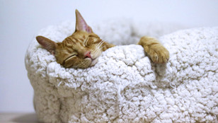 10-Minute Bedtime Yoga