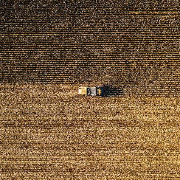Raccolta del grano